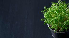 endivie ist ein gesunder salat f r herbst und winter evidero. Black Bedroom Furniture Sets. Home Design Ideas