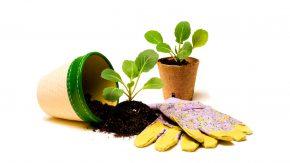 Handschuhe, Topf, Pflanze und Erde