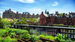 Urban Gardening stammt aus New York