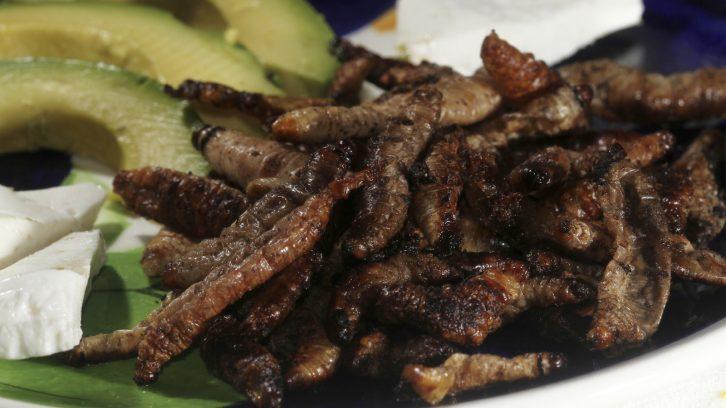 Mexikanisches Essen mit Wuermern