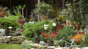 Garten ohne Giftpflanzen