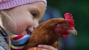 Kind mit Huhn