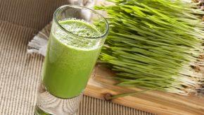 Weizengras passt gut zu Grünen Smoothies