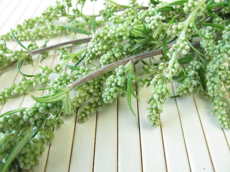 pollenflug im april diese pflanzen bl hen im april evidero. Black Bedroom Furniture Sets. Home Design Ideas