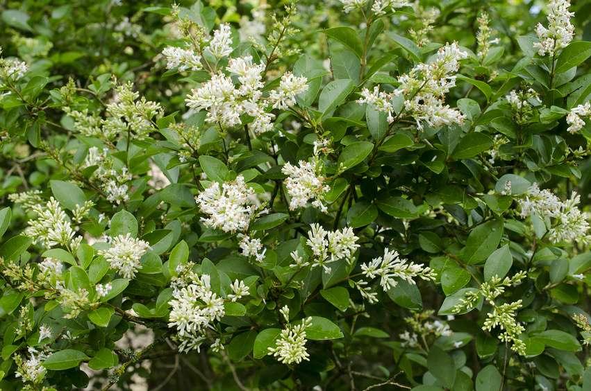 Pollenflug im april diese pflanzen bl hen im april evidero - Piante profumate da giardino ...