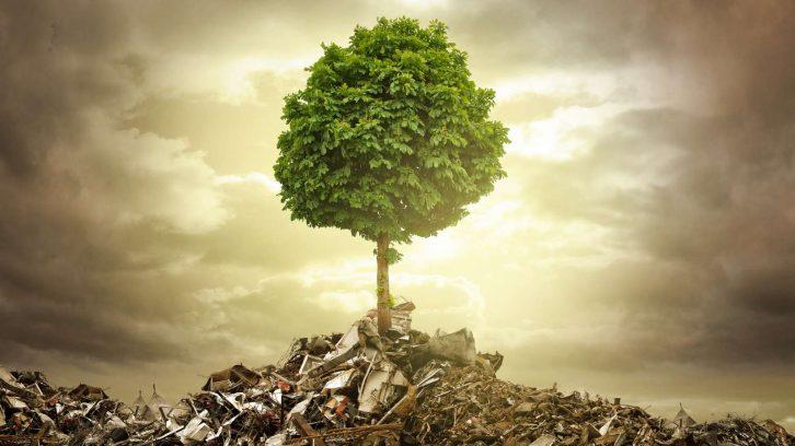 Tipps für ein nachhaltigeres Leben, die jeder kennen sollte | evidero